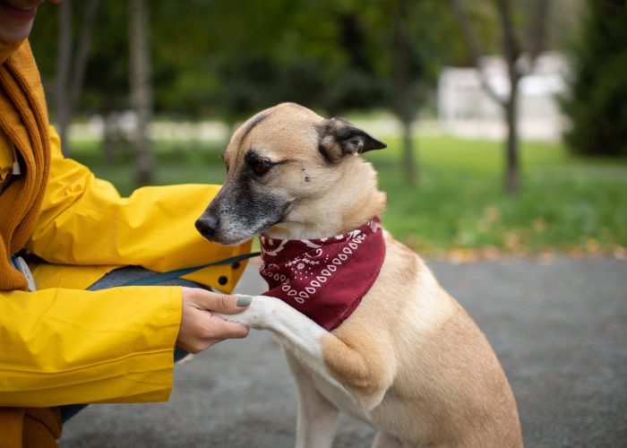 Unrecognizable female in yellow coat shaking paw of obedient dog while training pet on alley in autumn park